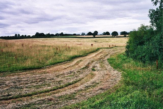 Grassland west of Launde Park Wood