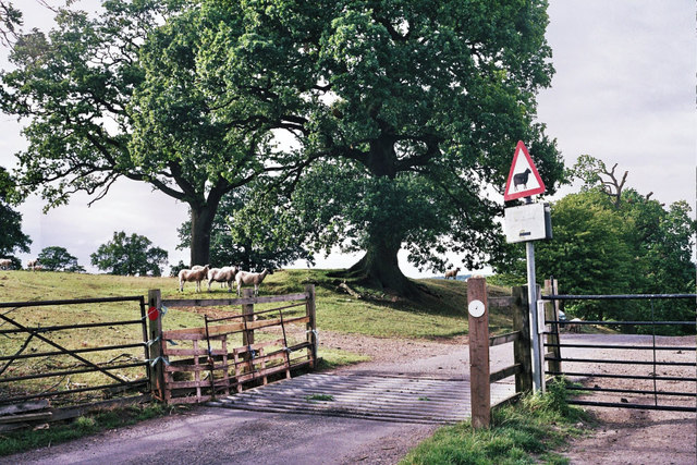 Cattle grid at  Launde