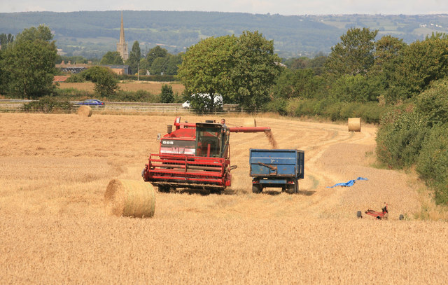 Harvest Time nr Cam and Dursley