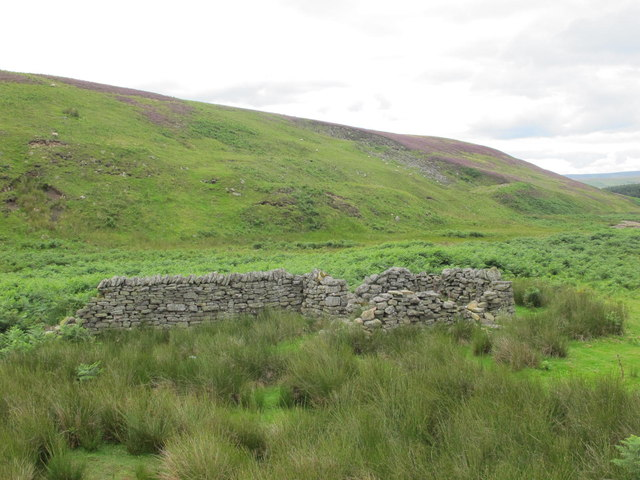 Sheepfold at the confluence of the Stanhope and East Whiteley Burns