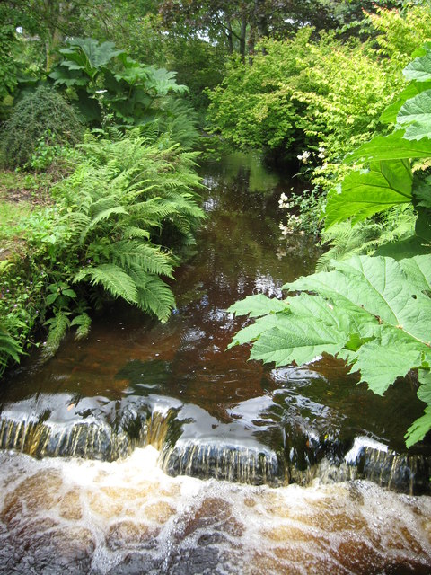 Luxuriant foliage on the banks of Geilston Burn