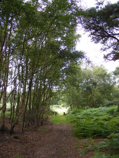 Footpath to Sandlings Walk over Blaxhall Common