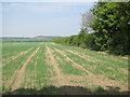 TL6149 : Farmland near West Wickham by Hugh Venables