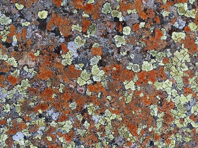 Lichen mosaic on dolerite, Caldron Snout