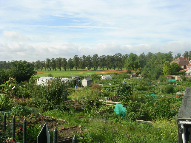 Allotments - Albemarle Road