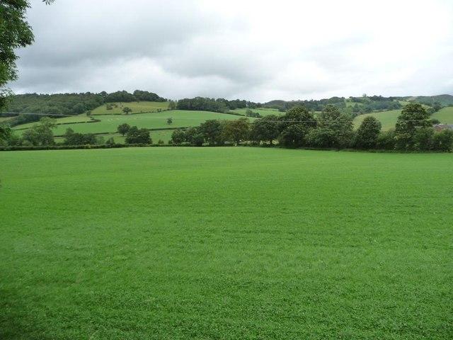 The green, green grass