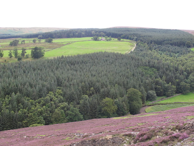The valley of Stanhope Burn below High House