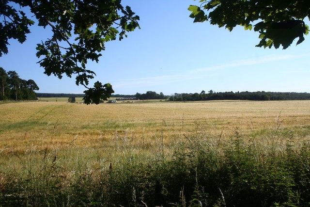 Fields by Tornagrain