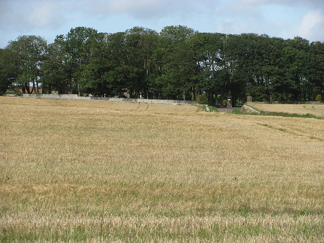 Barley field near Shoreston Hall