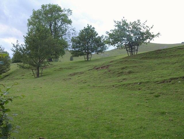 Trees on hillside, Ilam