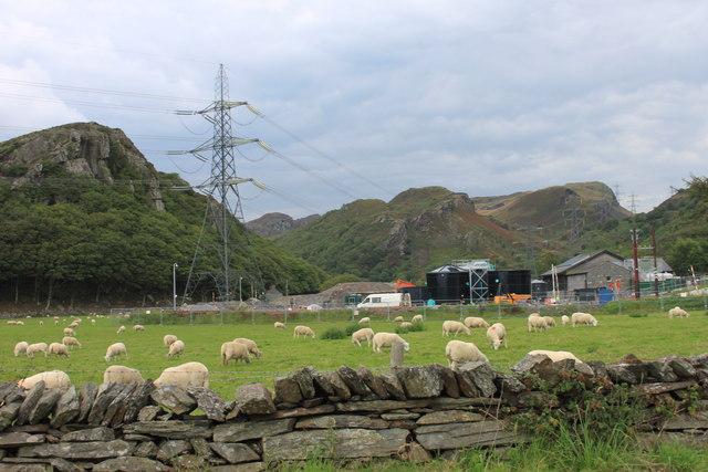 Sheep grazing near Cilfor