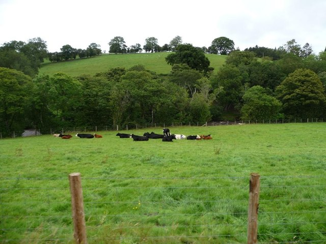 Herd of cows in riverside field