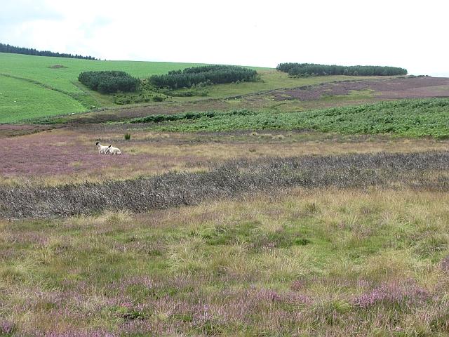 Moorland between the Wheel Burn and Blythe Water