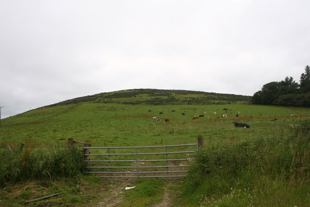 Cattle Field by Cairnborrow
