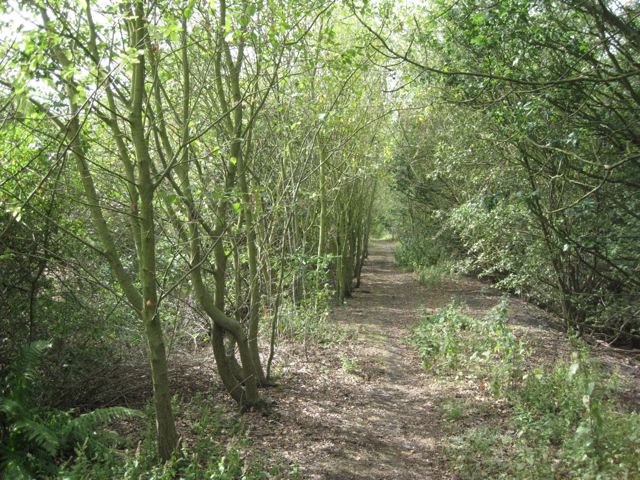Dismantled railway south of Birch Coppice
