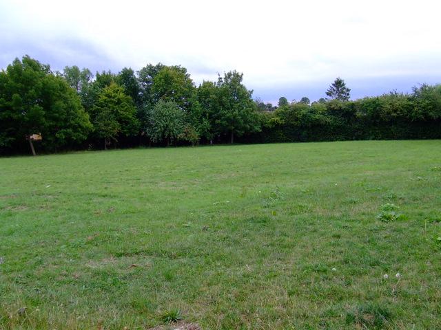 Field off Cox's Gardens