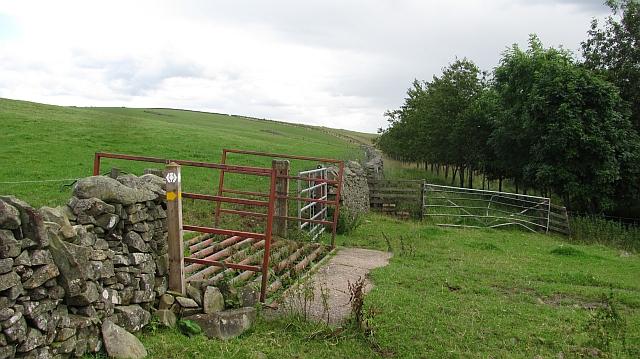 Paths by the Snawdon Burn