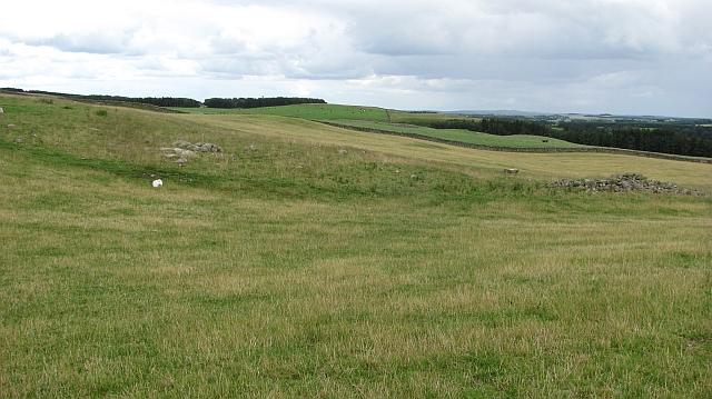 Grassland on Heugh Hill