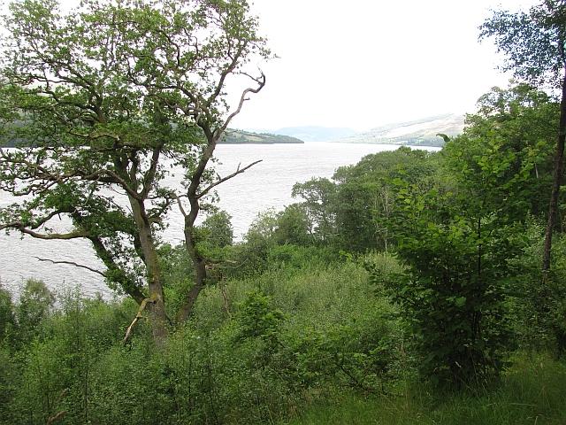 Woodland, Loch Tay