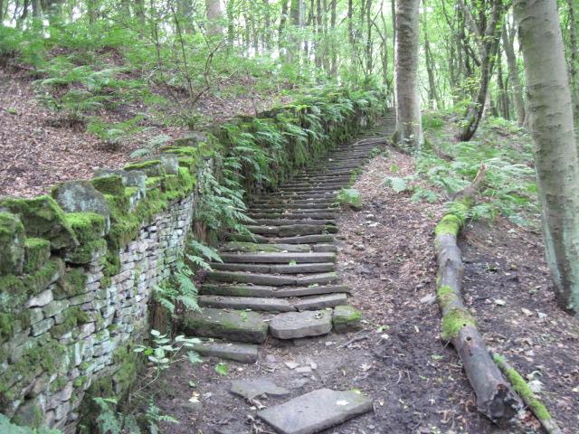 Footpath in Pighill Wood