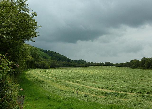 Hay field near Cors Caron, Ceredigion