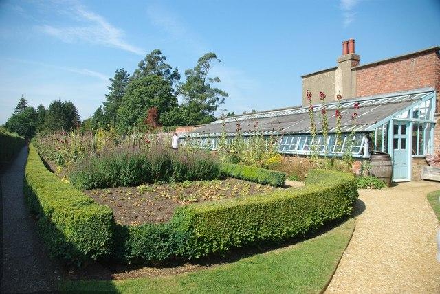 Hollyhocks & Darwin's Greenhouse
