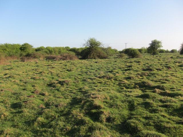 Anthills on Great Wilbraham Common