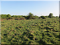 TL5357 : Anthills on Great Wilbraham Common by Hugh Venables