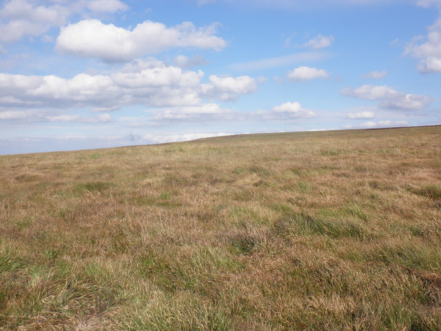 Moorland, above Langcombe Head
