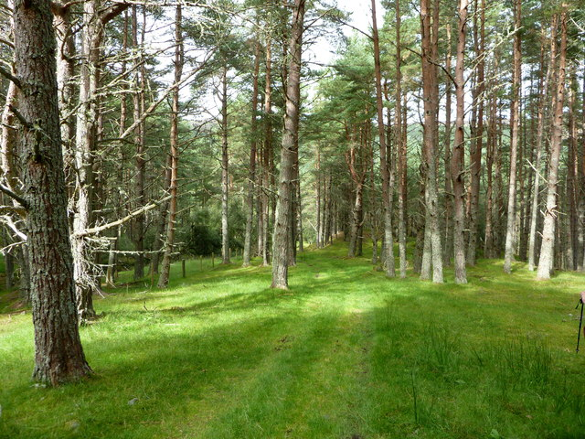 Woodland track, Strathcarron
