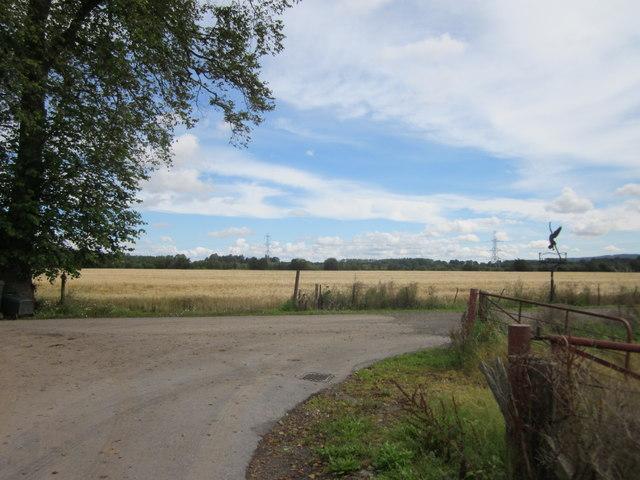 Fields of Haughend in Strathmore