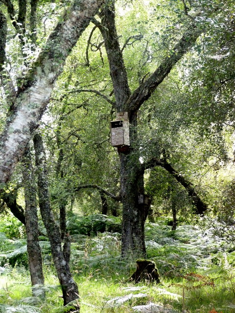 Nest-box in the woods