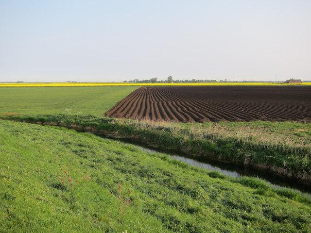 Furrowed field