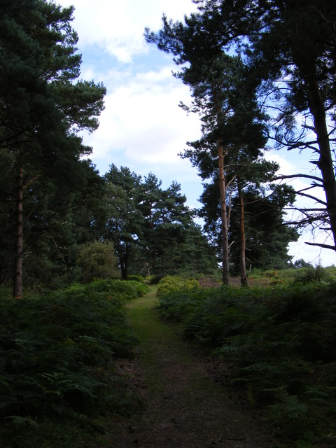 Footpath to Sandlings Walk over Blaxhall Heath