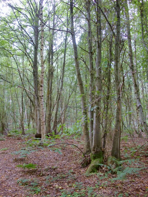 Woodland, Coopers Moor