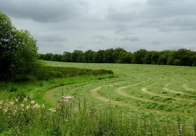 Grass field north-east of Tregaron, Ceredigion