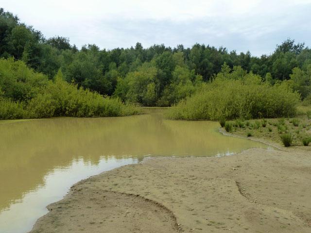 Pond, Bognor Common sand quarry