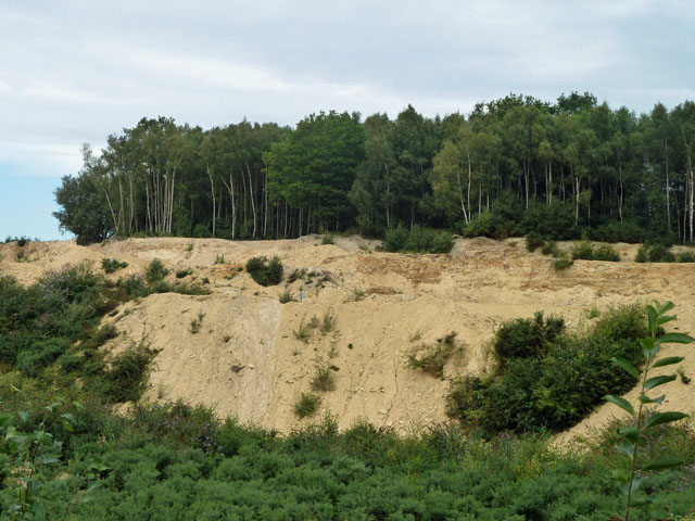 Quarry face in Hythe Beds, Bognor Common