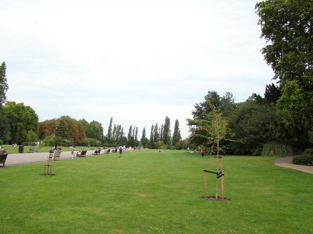 Row of trees in Regent's Park