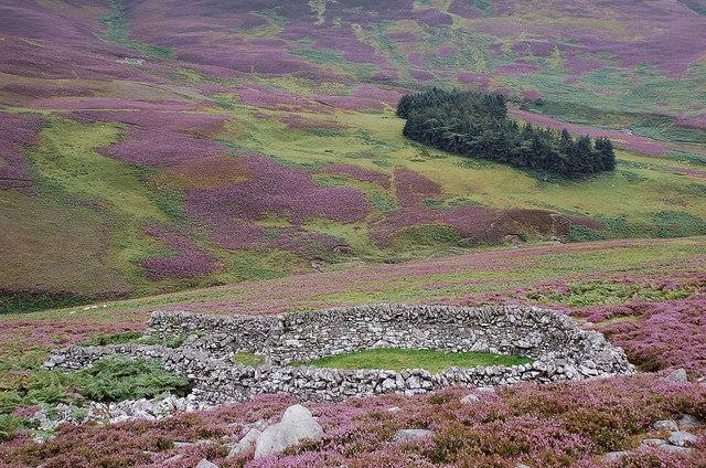 Sheepfold on a heathery hillside