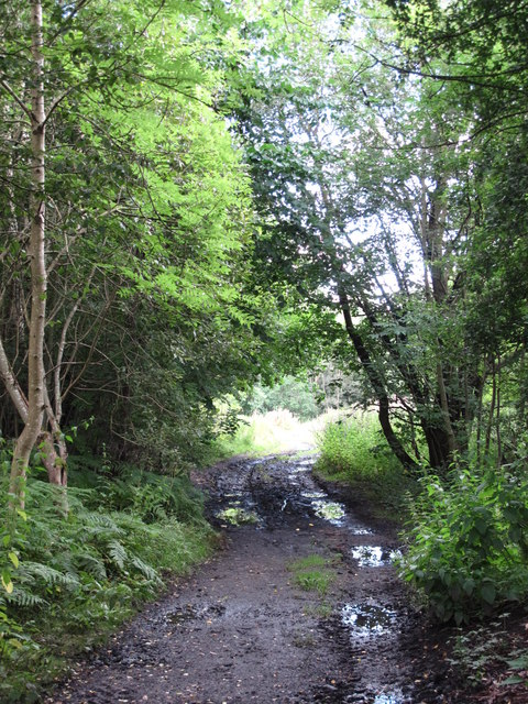 Former tramway by Haltwhistle Burn (2)