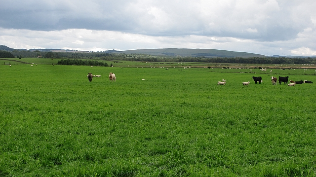A large field by Westruther