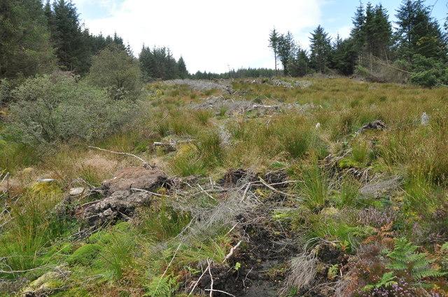 Gap in the forest, NE of Sithein, Arran