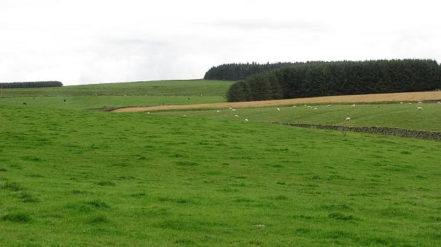 A field by Raecleugh