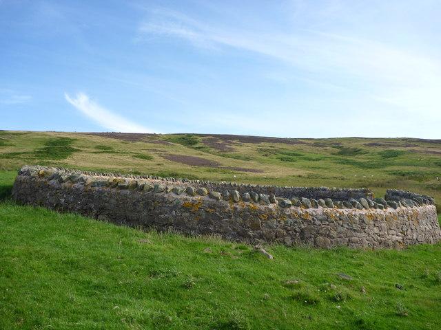 East Lothian Landscape : Sheepfold Below Deuchrie Edge