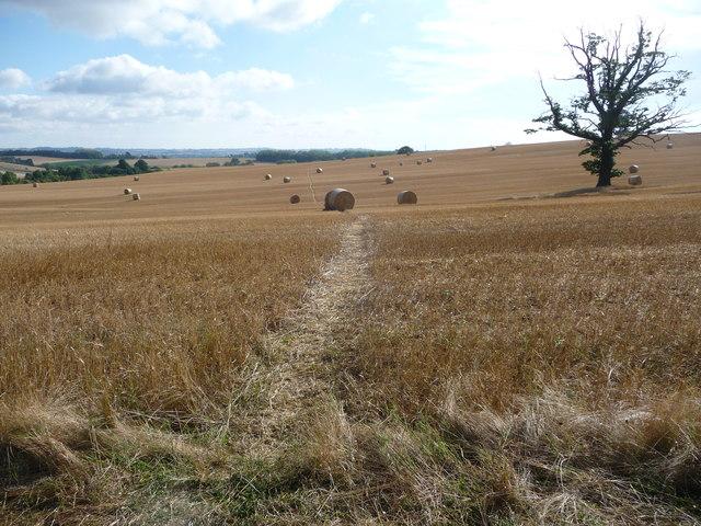 Footpath across fields in August