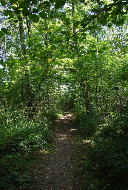 A shady path in Trench Wood near Sale Green
