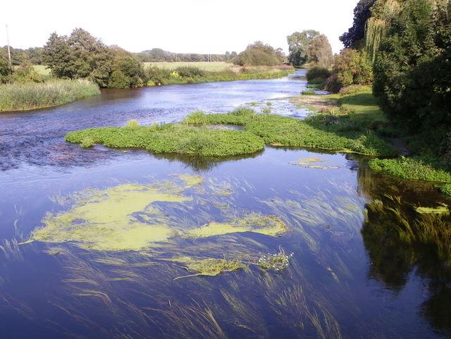 River Stour, Spetisbury