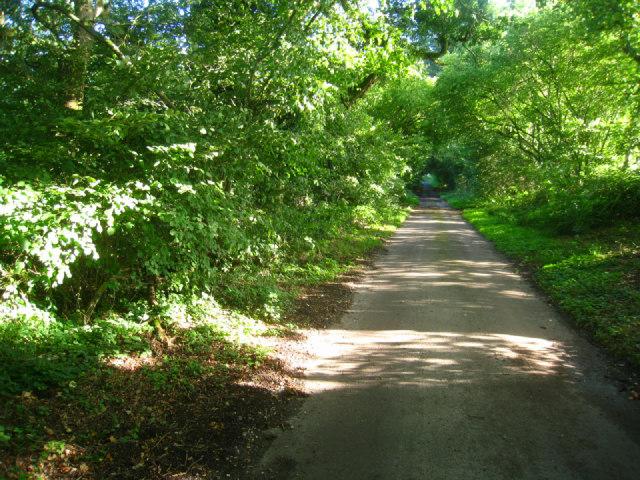 Lane to St Nicholas - Steventon