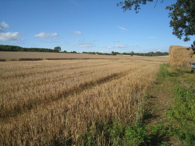 Footpath by Nurshanger Farm